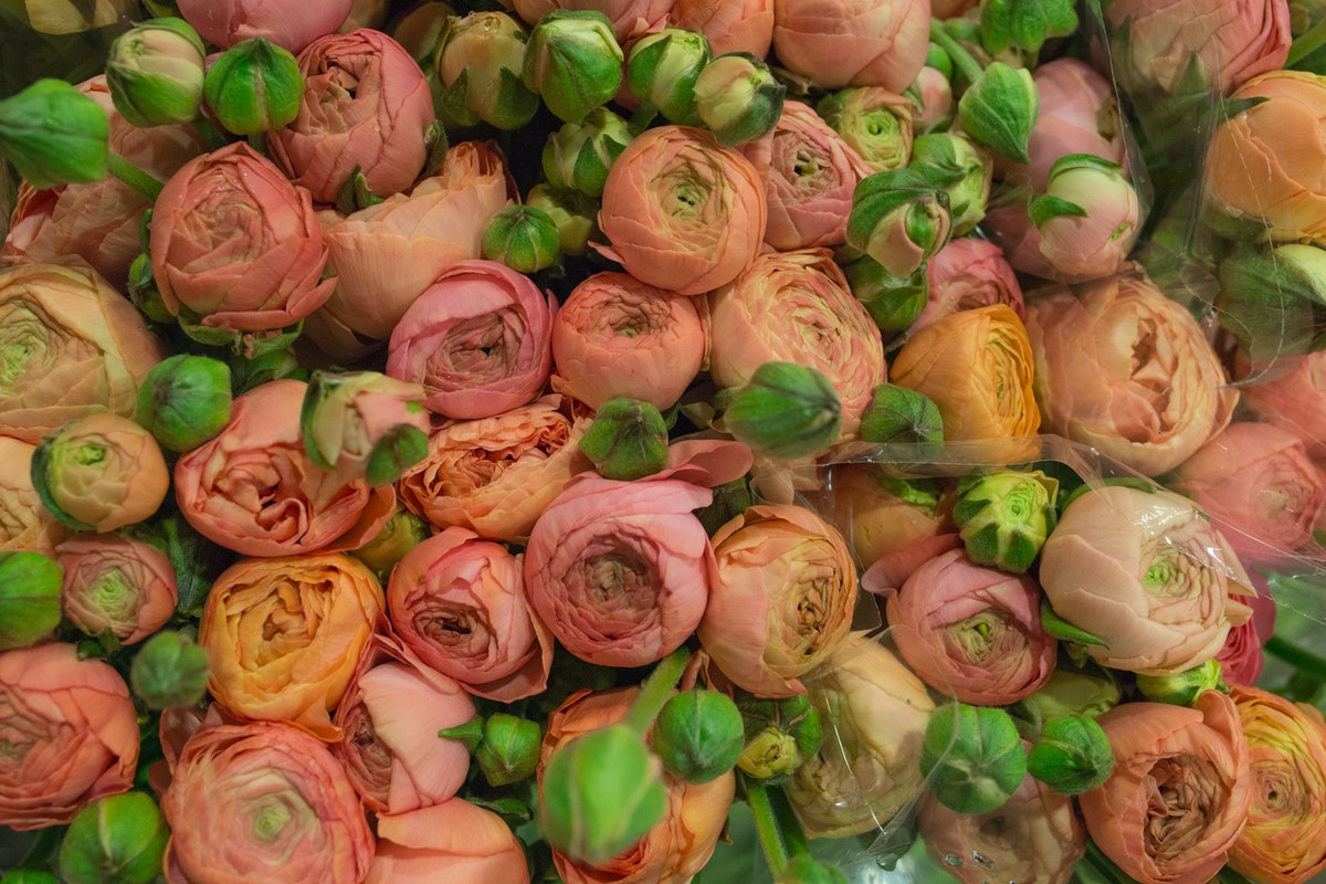 New Covent Garden Flower Market April 2017 Market Report Rona Wheeldon Flowerona Azur Salmon Ranunculus At Dg Wholesale