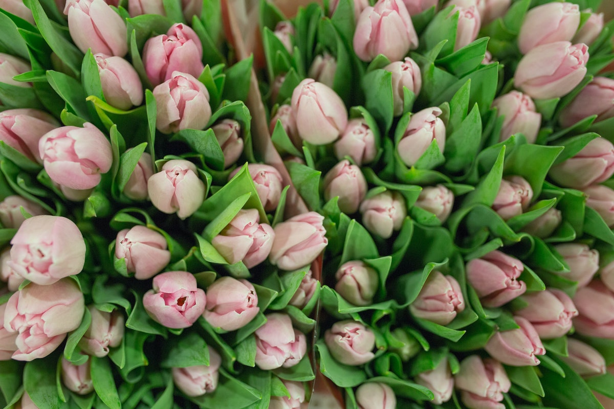 New Covent Garden Flower Market April 2017 Market Report Rona Wheeldon Flowerona Essence Tulips At S Robert Allen