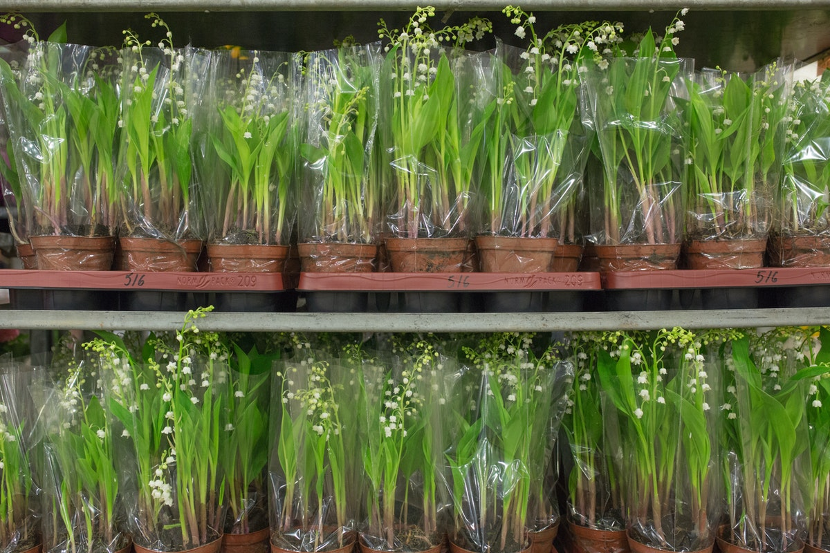 New Covent Garden Flower Market April 2017 Market Report Rona Wheeldon Flowerona Lily Of The Valley Plants At Evergreen