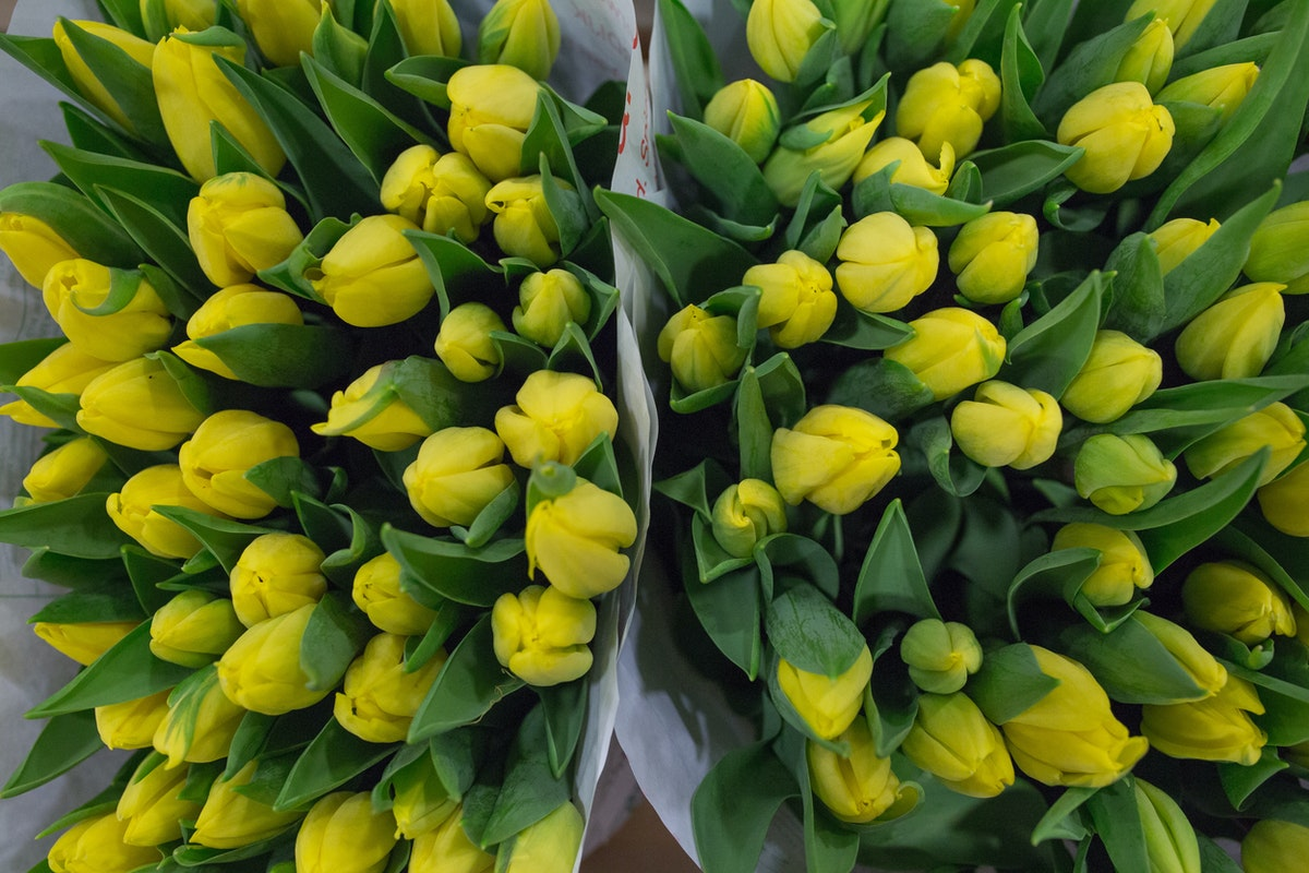 New Covent Garden Flower Market April 2017 Market Report Rona Wheeldon Flowerona Strong Gold Tulips At J H Hart Flowers