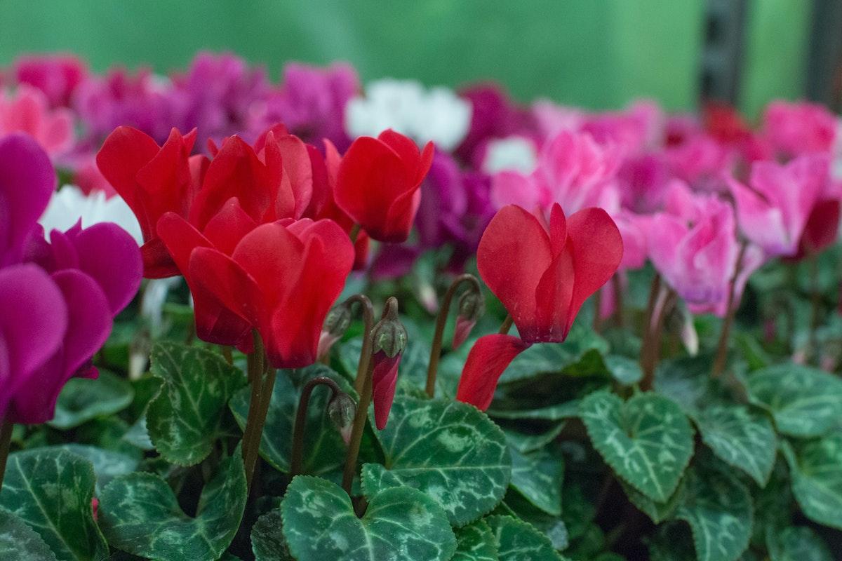 New Covent Garden Flower Market August 2016 Market Report Flowerona Hr A 10