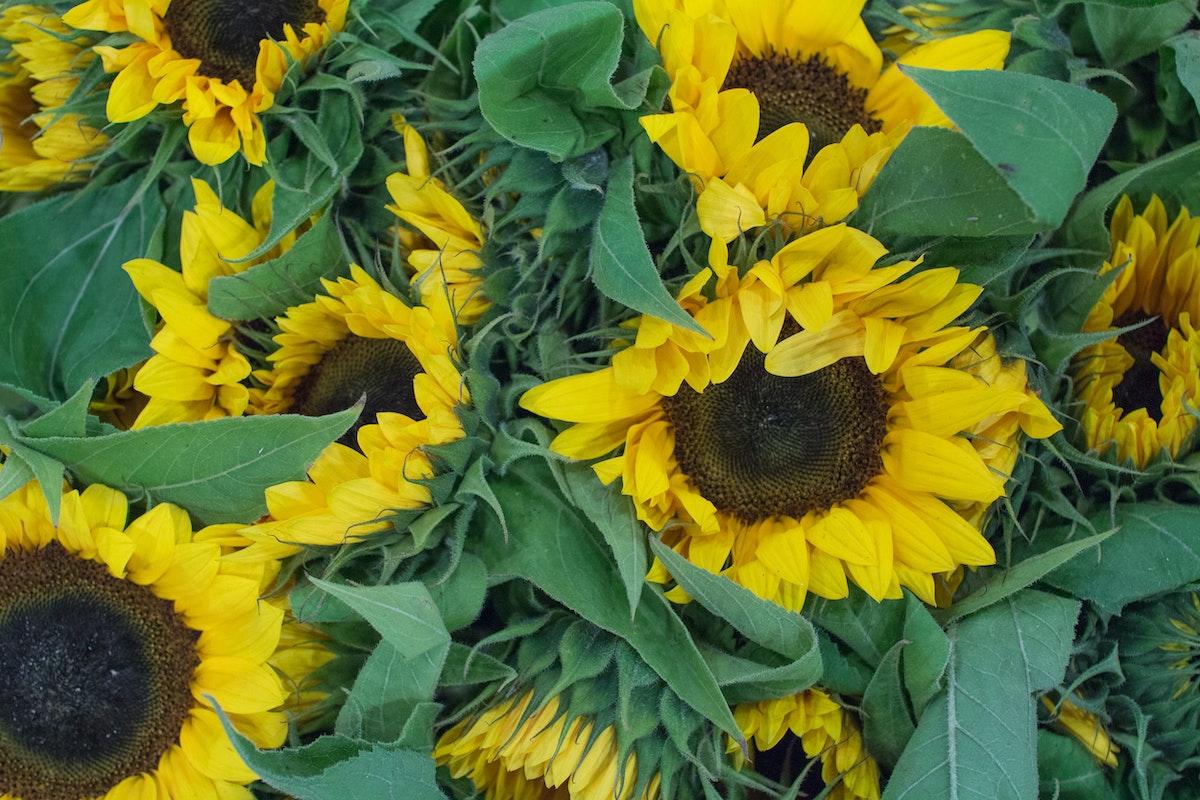 New Covent Garden Flower Market August 2016 Market Report Flowerona Hr A 2