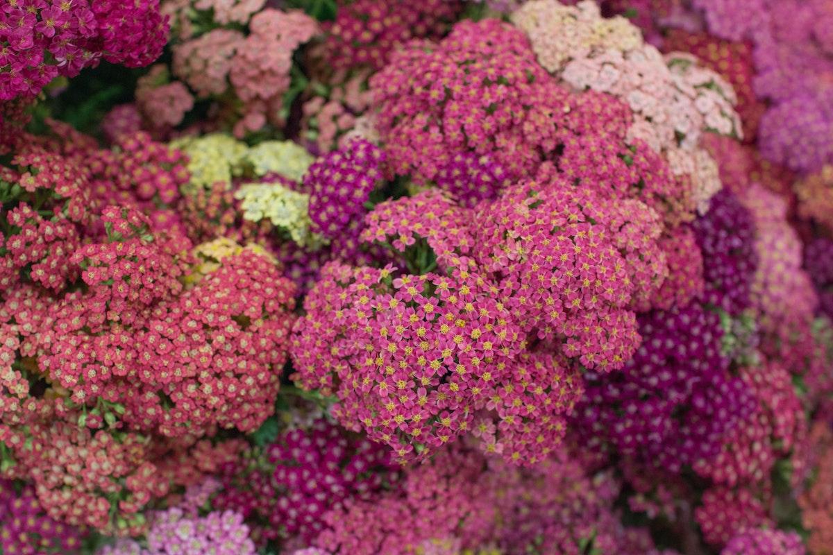 New Covent Garden Flower Market August 2016 Market Report Flowerona Hr A 33