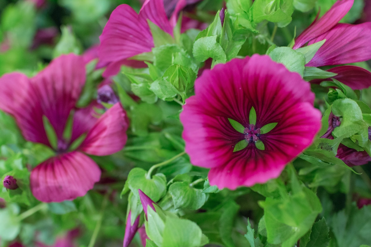 New Covent Garden Flower Market August 2016 Market Report Flowerona Hr A 36