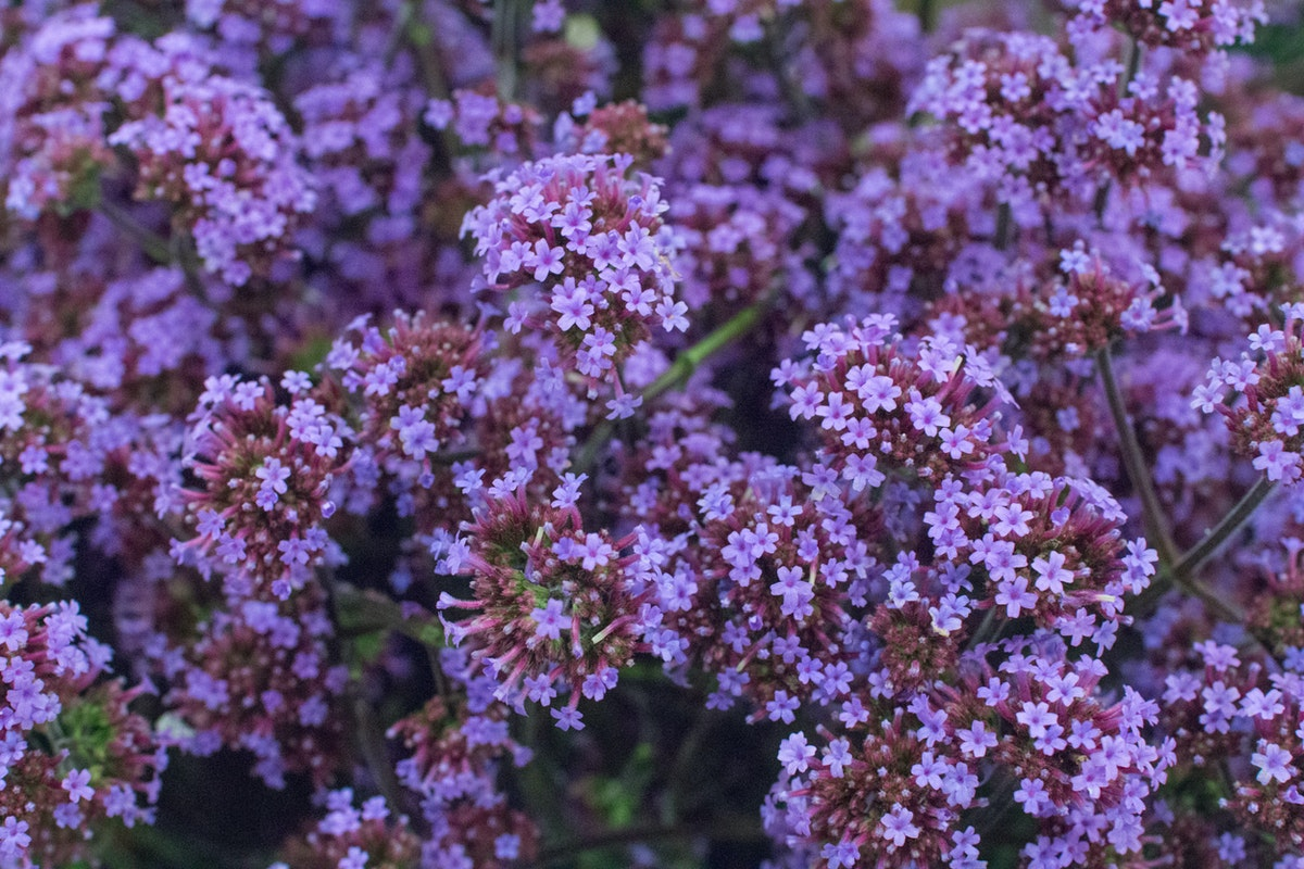 New Covent Garden Flower Market August 2016 Market Report Flowerona Hr A 45