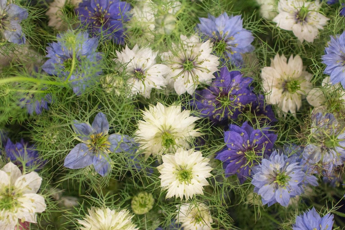 New Covent Garden Flower Market August 2016 Market Report Flowerona Hr A 80