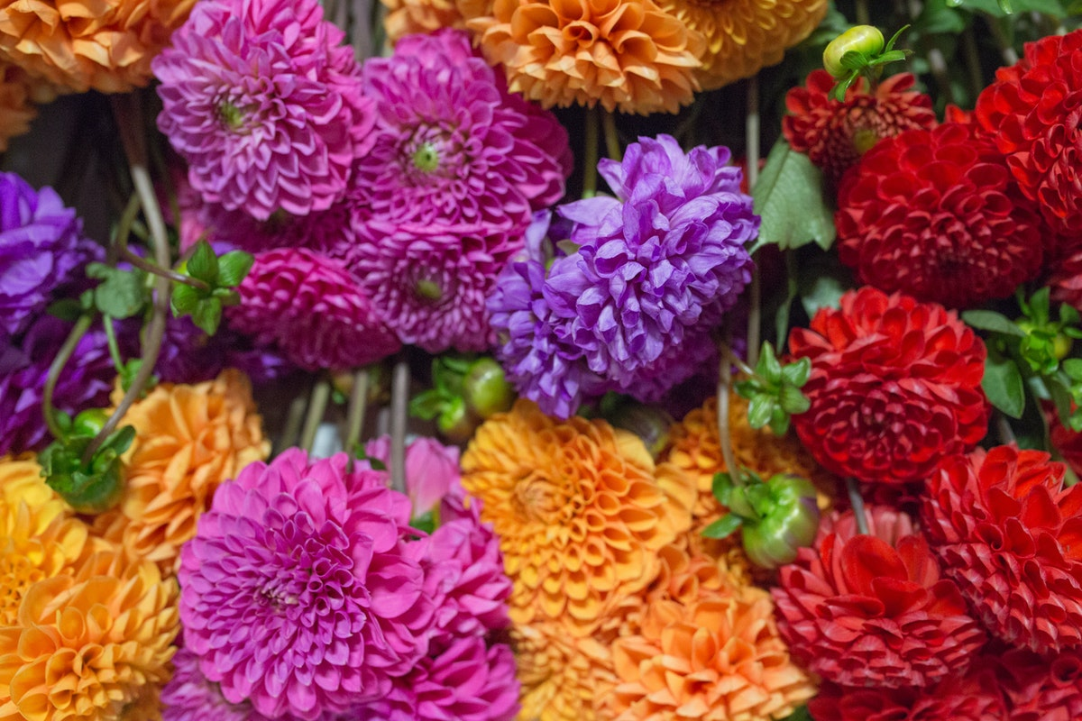 New Covent Garden Flower Market August 2017 Flower Market Report Rona Wheeldon Flowerona Boxes Of Mixed British Dahlias At Pratley 2