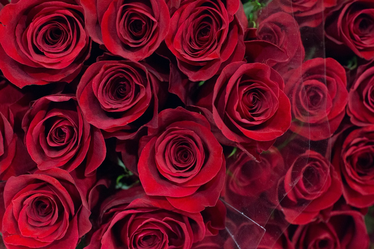 New Covent Garden Flower Market February 2016 Market Report Flowerona Hr 1