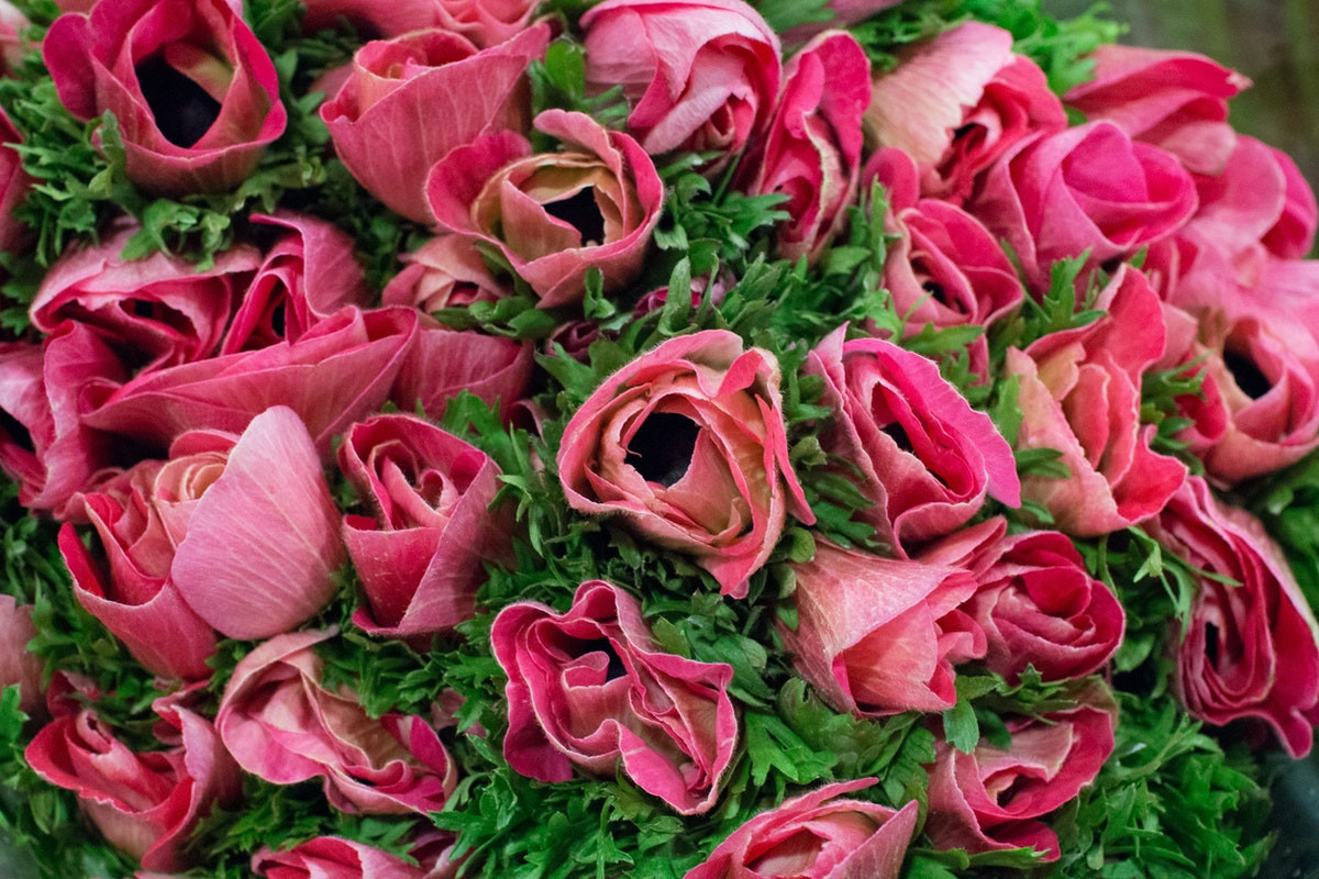 New Covent Garden Flower Market February 2016 Market Report Flowerona Hr 10