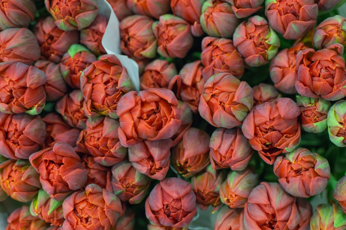 New Covent Garden Flower Market February 2017 Market Report Flowerona High Res Red Princess Tulips At Bloomfield