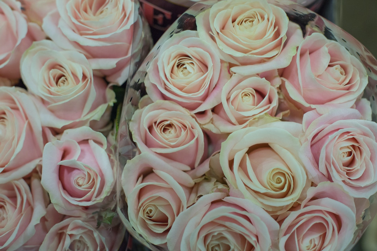New Covent Garden Flower Market February 2017 Market Report Flowerona High Res Sweet Avalanche Roses At Bloomfield