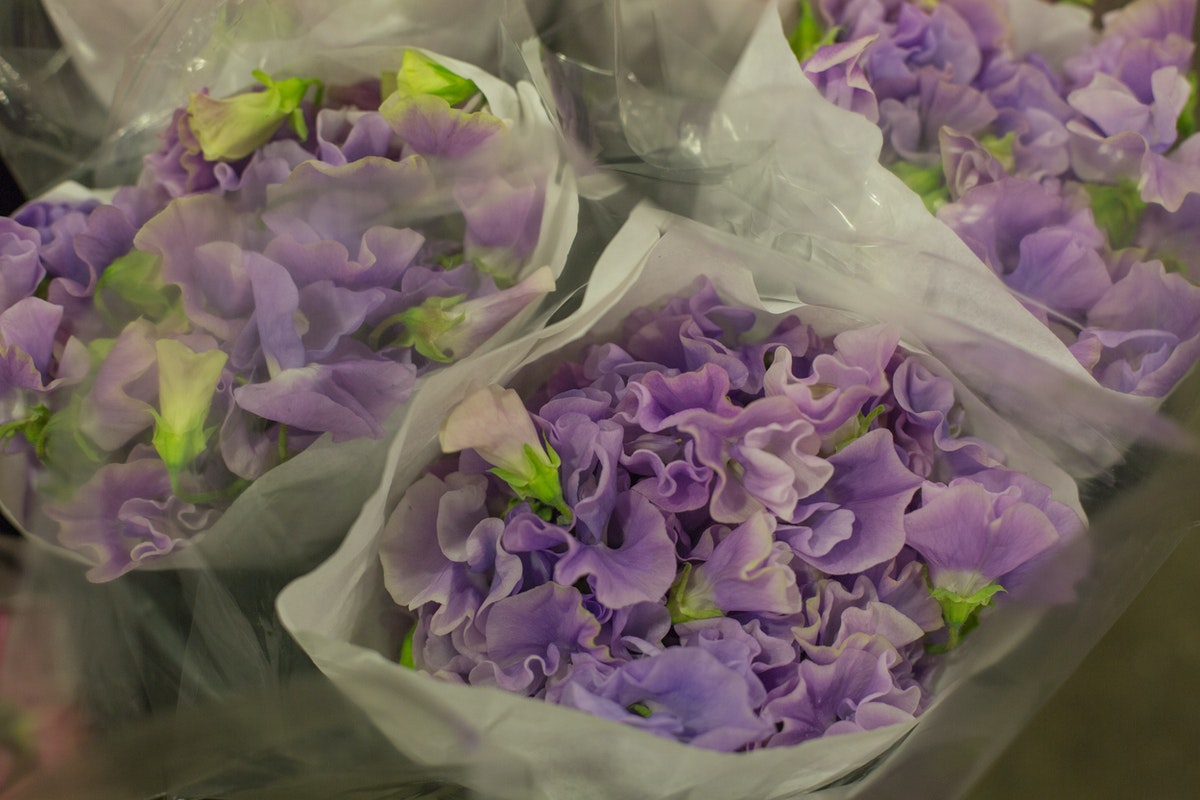 New Covent Garden Flower Market February 2017 Market Report Flowerona High Res Sweet Peas At Dg Wholesale Flowers