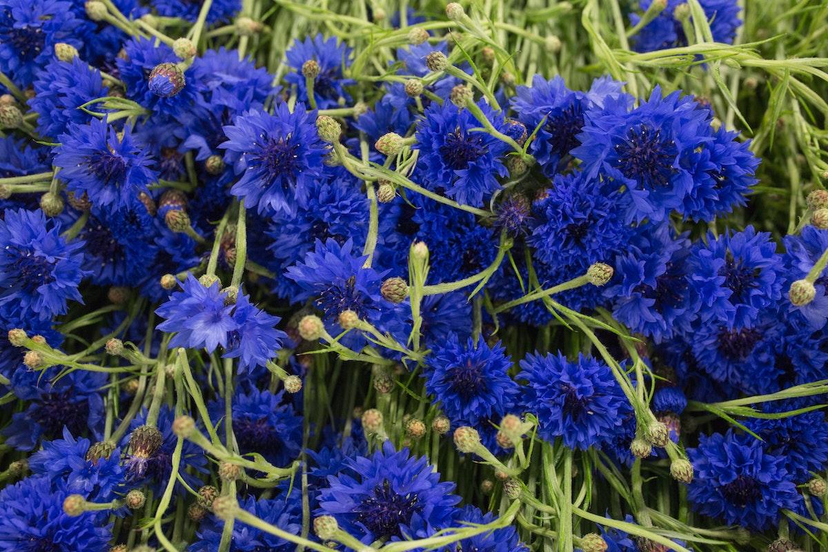 New Covent Garden Flower Market Flower Market Report June 2017 Rona Wheeldon Flowerona British Cornflowers At Pratley