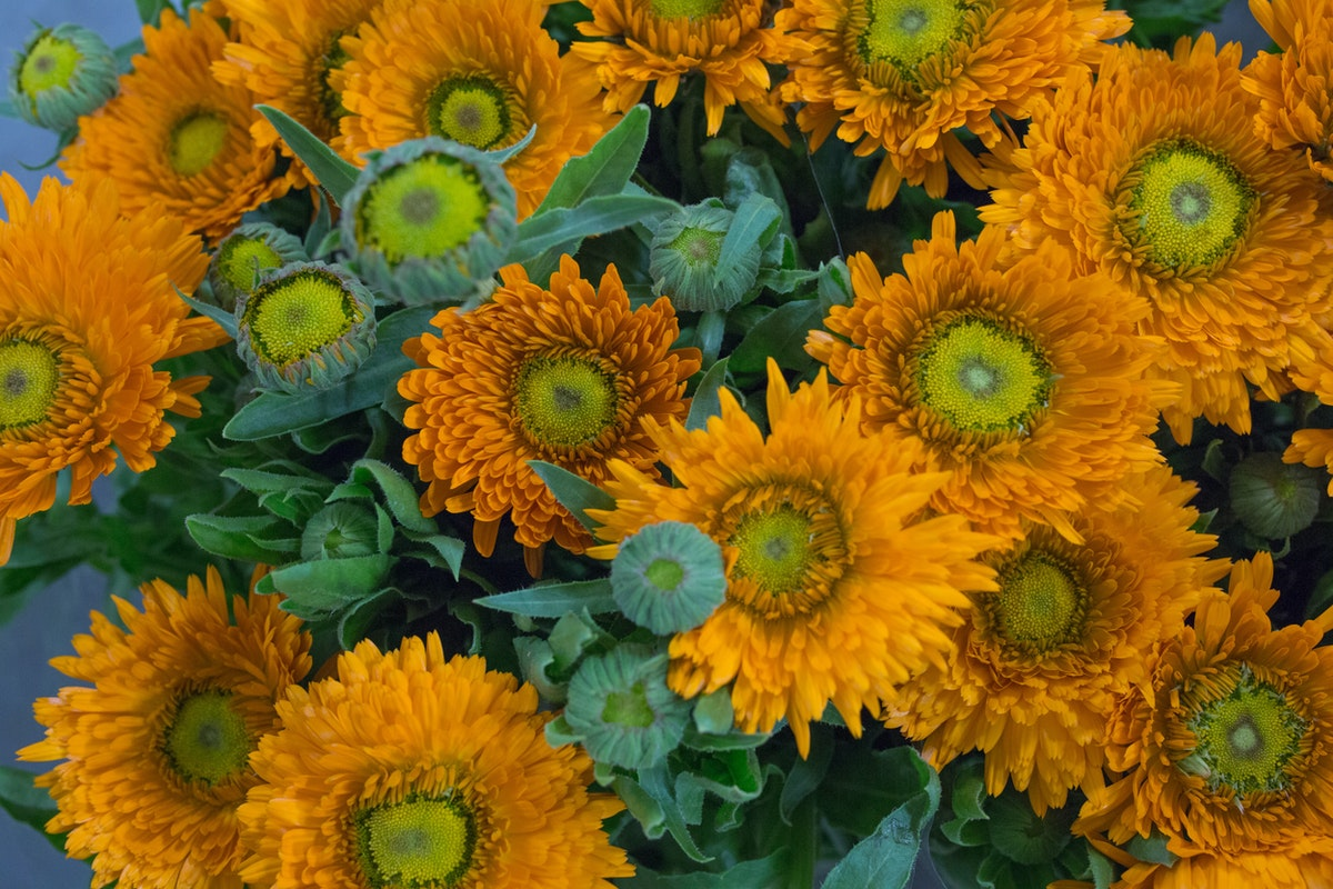 New Covent Garden Flower Market Flower Market Report June 2017 Rona Wheeldon Flowerona Calendula Officinalis Green Spot Orange At Dennis Edwards Flowers