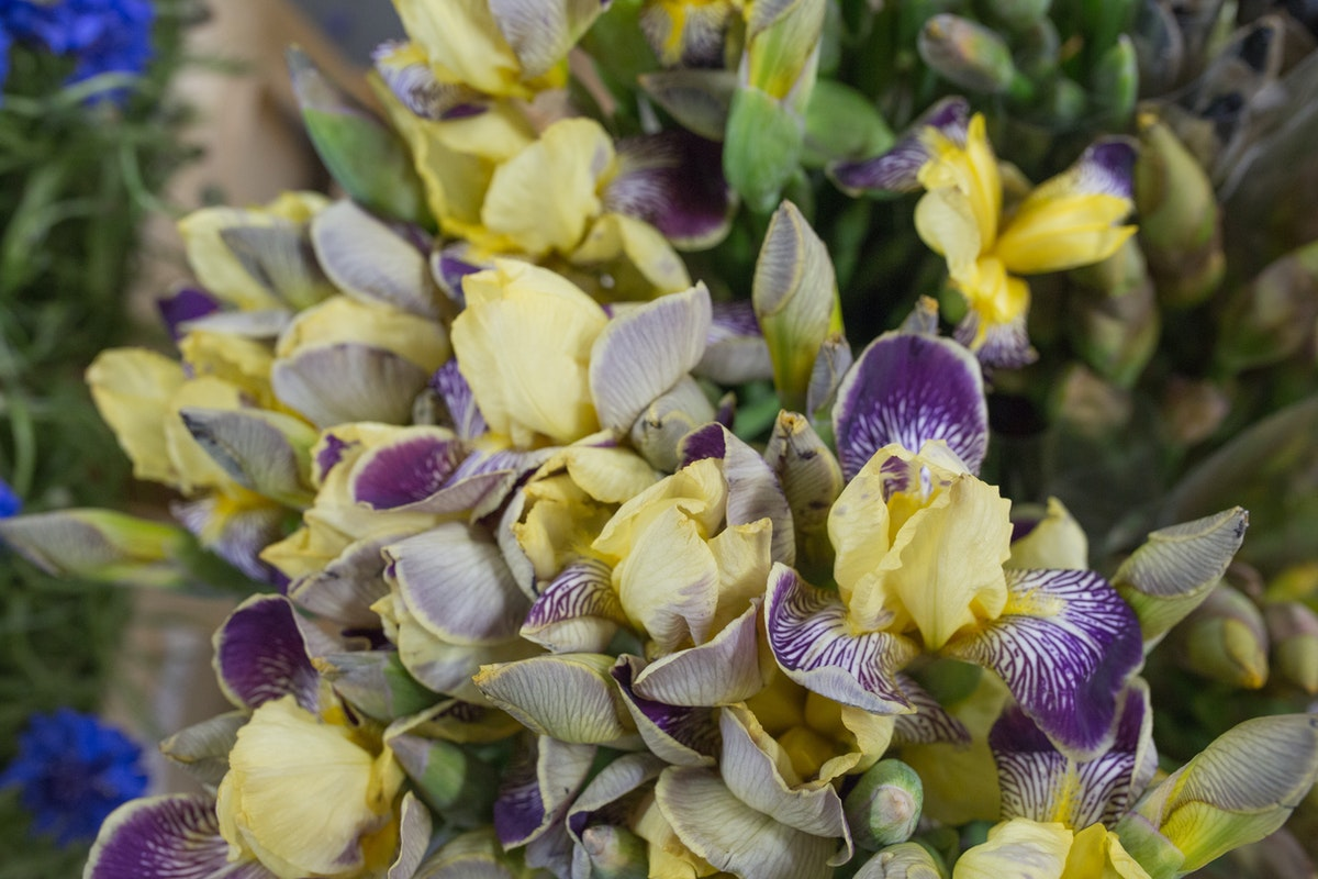 New Covent Garden Flower Market Flower Market Report June 2017 Rona Wheeldon Flowerona Irises At Dennis Edwards