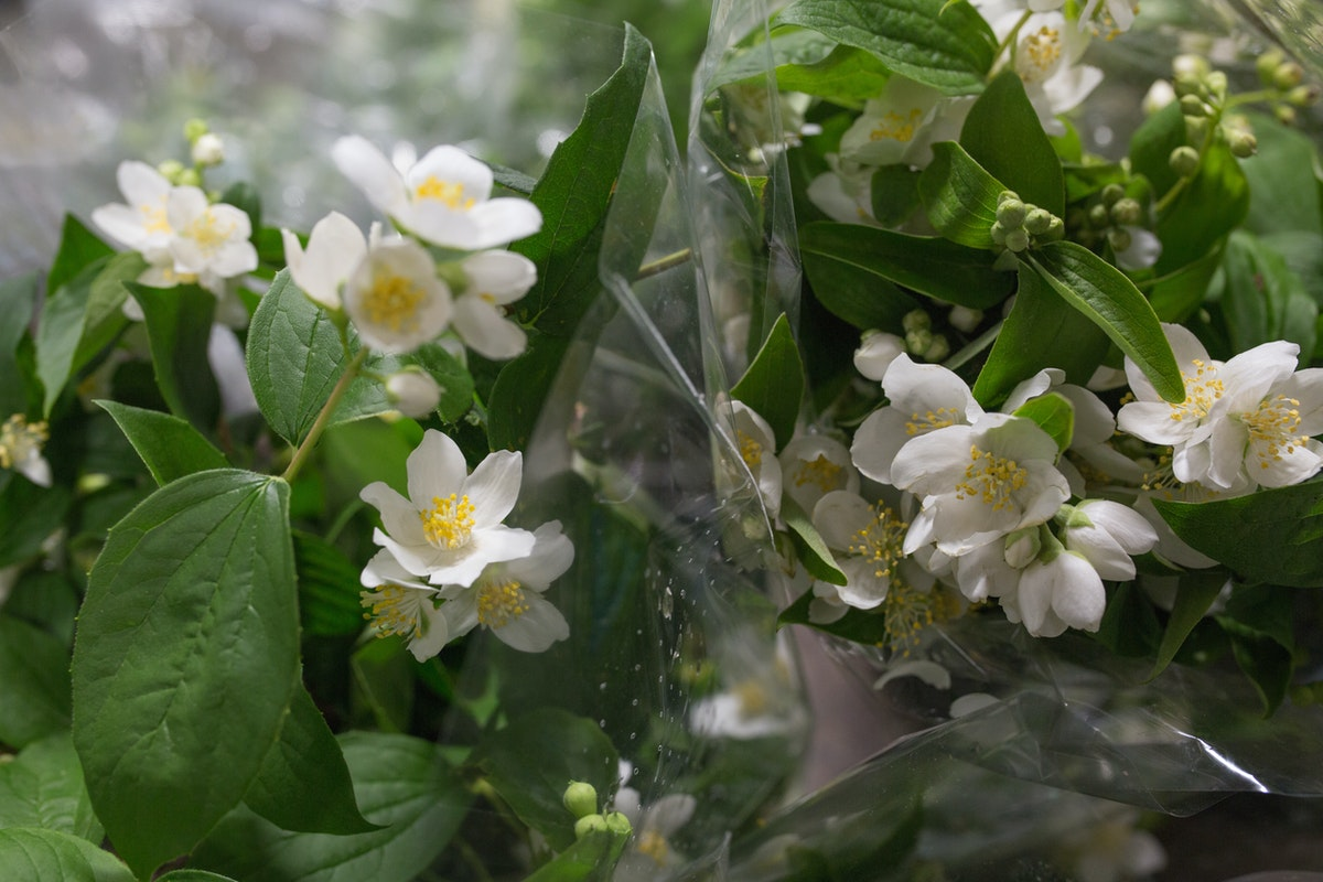 New Covent Garden Flower Market Flower Market Report June 2017 Rona Wheeldon Flowerona Italian Philadelphus Mock Orange At Porters Foliage