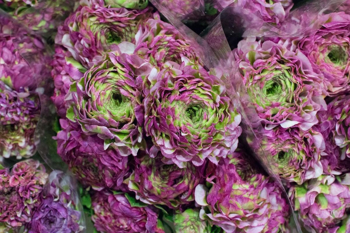 New Covent Garden Flower Market Januaryôçö2016 Market Report Flowerona Hr 9