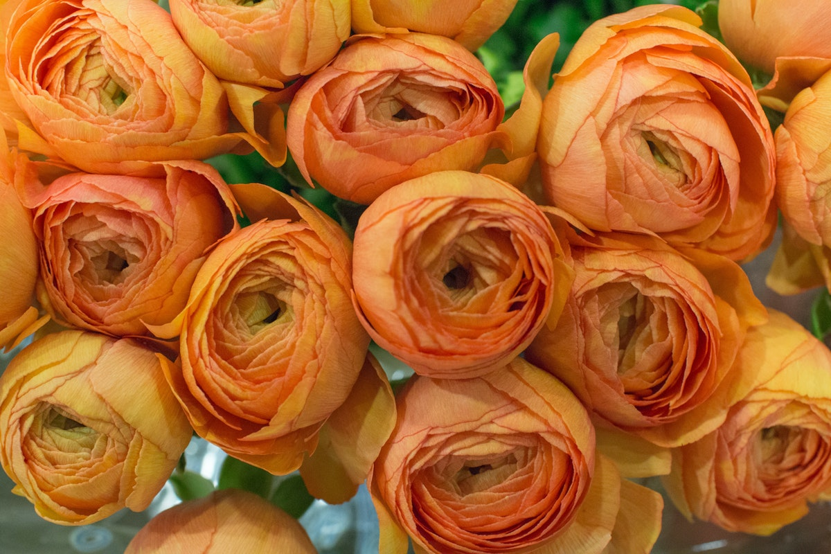 New Covent Garden Flower Market January 2017 Market Report Flowerona A 25
