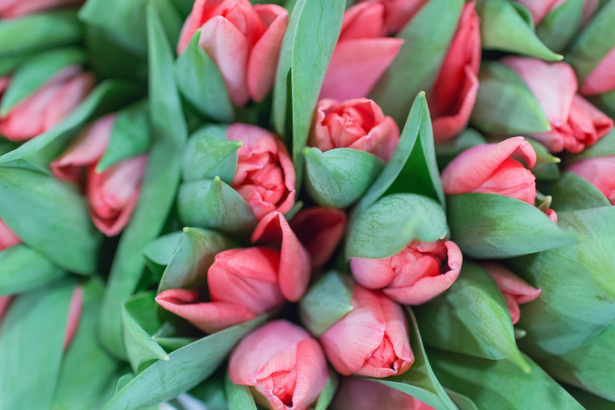 New Covent Garden Flower Market January 2017 Market Report Flowerona A 9