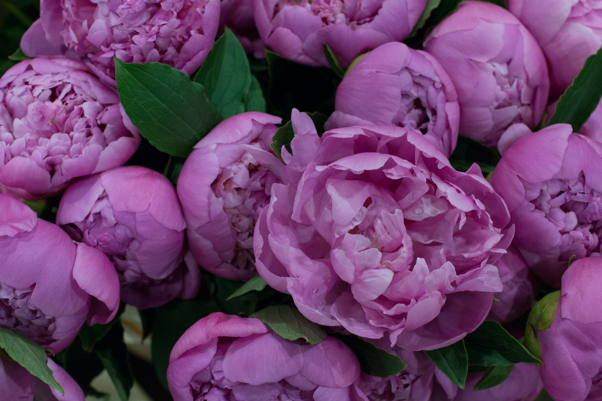 New Covent Garden Flower Market June 2016 Market Report Flowerona Hr 9A
