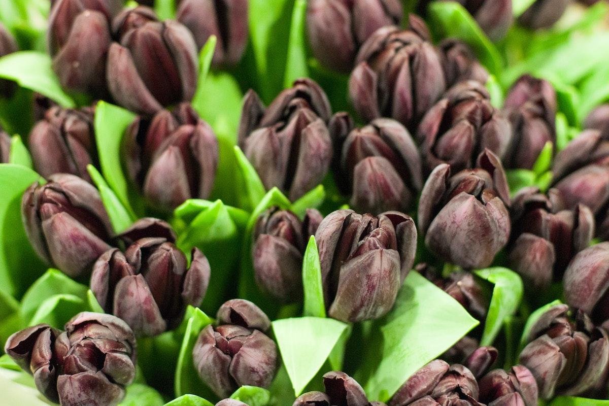 New Covent Garden Flower Market March 2015 Market Report Flowerona 11