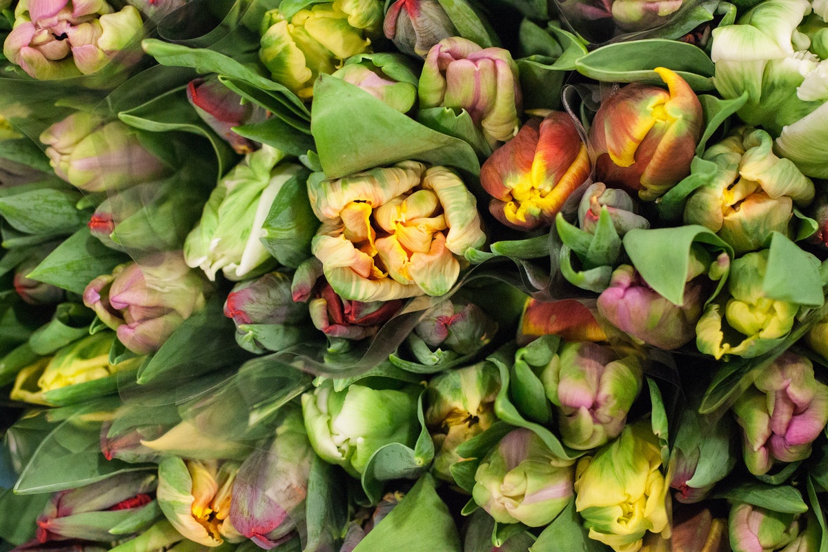 New Covent Garden Flower Market March 2015 Market Report Flowerona 12