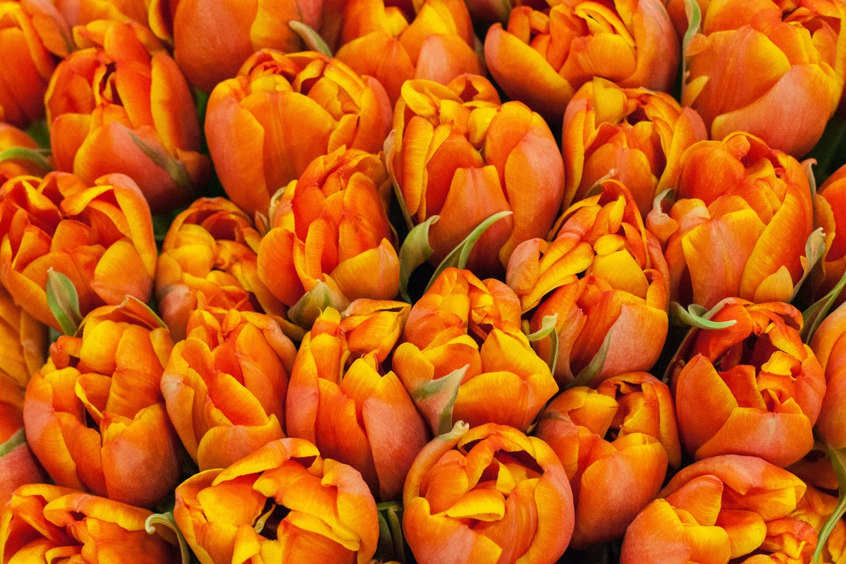 New Covent Garden Flower Market March 2015 Market Report Flowerona 13