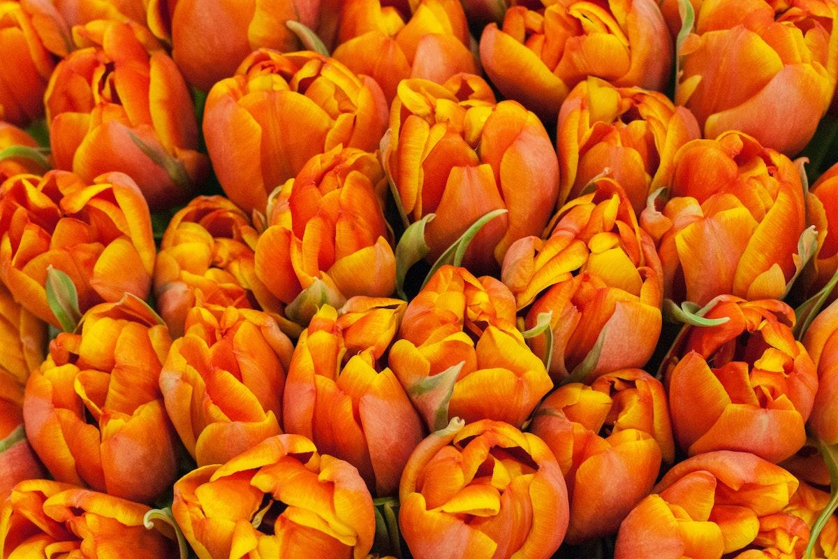 New Covent Garden Flower Market March 2015 Market Report Flowerona 13
