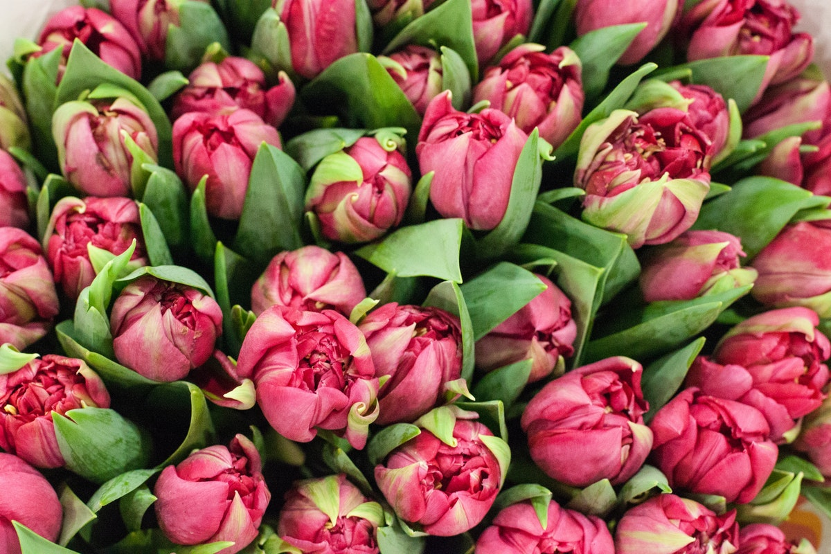 New Covent Garden Flower Market March 2015 Market Report Flowerona 14