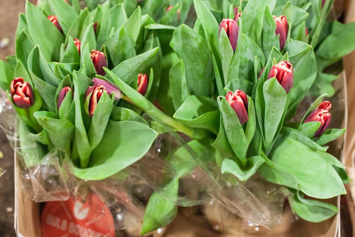 New Covent Garden Flower Market March 2015 Market Report Flowerona 15