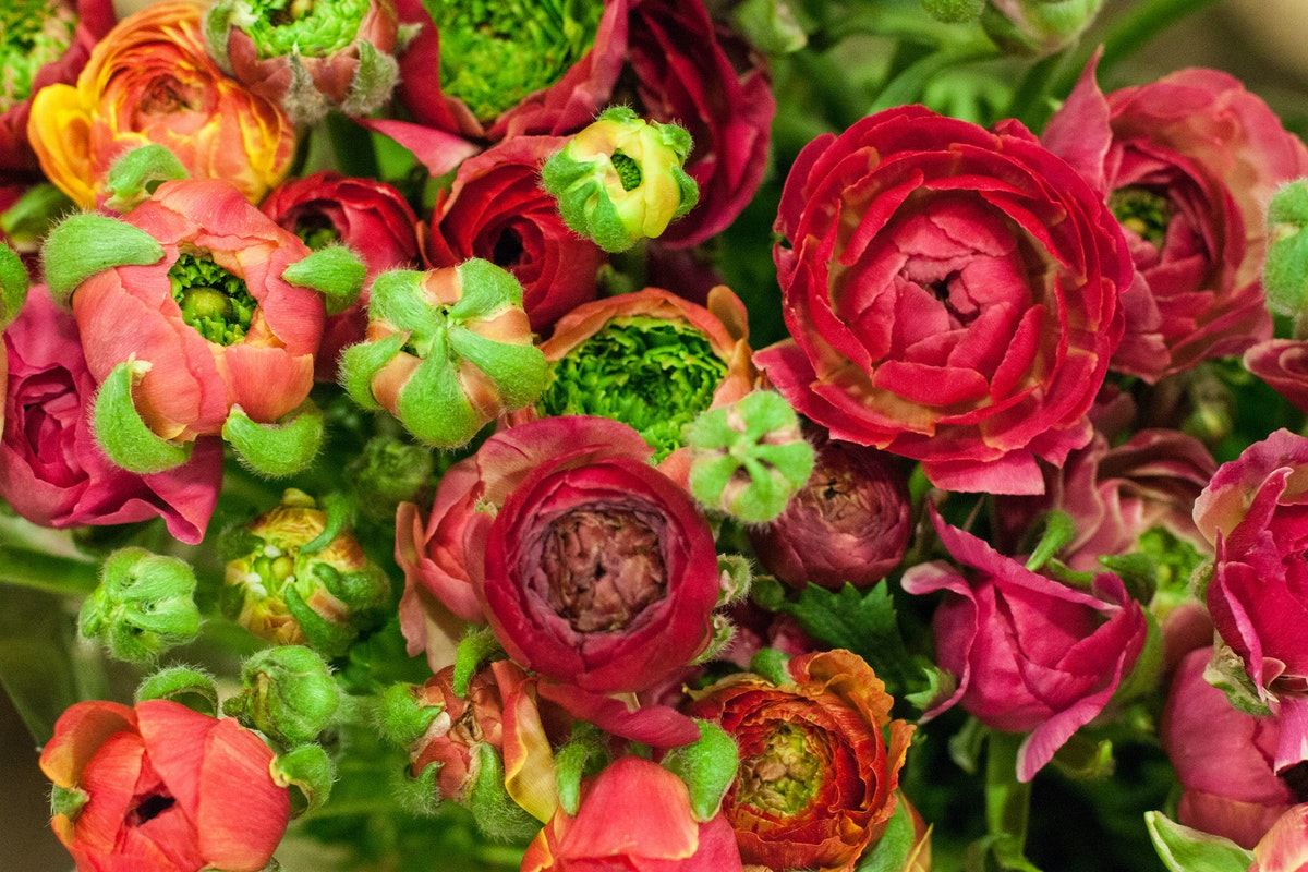 New Covent Garden Flower Market March 2015 Market Report Flowerona 17