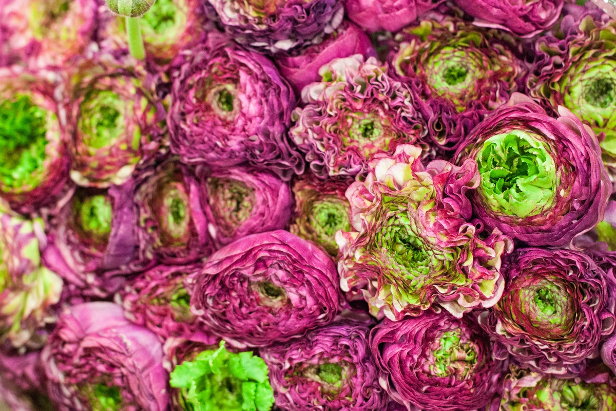 New Covent Garden Flower Market March 2015 Market Report Flowerona 18