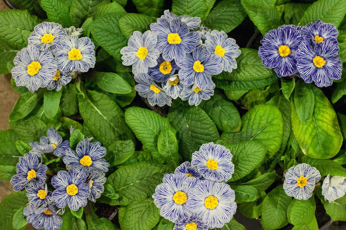 New Covent Garden Flower Market March 2015 Market Report Flowerona 21