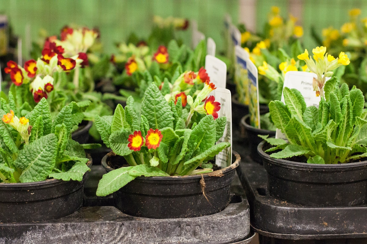 New Covent Garden Flower Market March 2015 Market Report Flowerona 22
