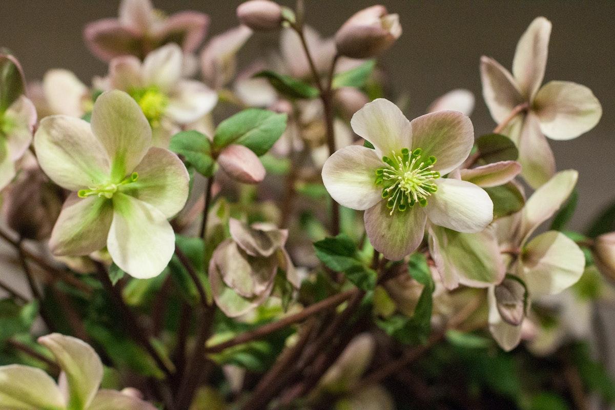 New Covent Garden Flower Market March 2015 Market Report Flowerona 25