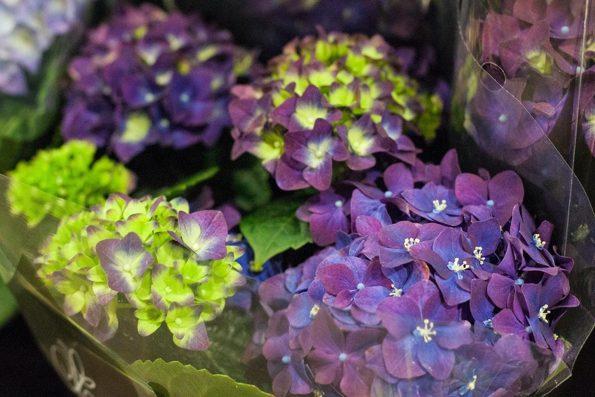 New Covent Garden Flower Market March 2015 Market Report Flowerona 27