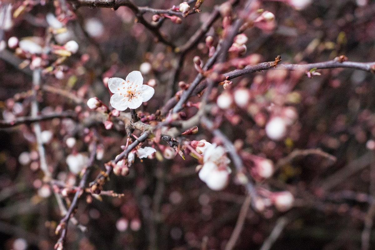 New Covent Garden Flower Market March 2015 Market Report Flowerona 28