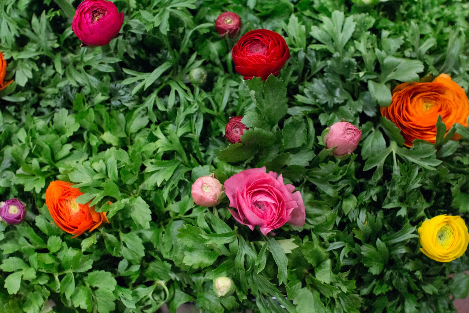 New Covent Garden Flower Market March 2016 Market Report Flowerona Hr 21