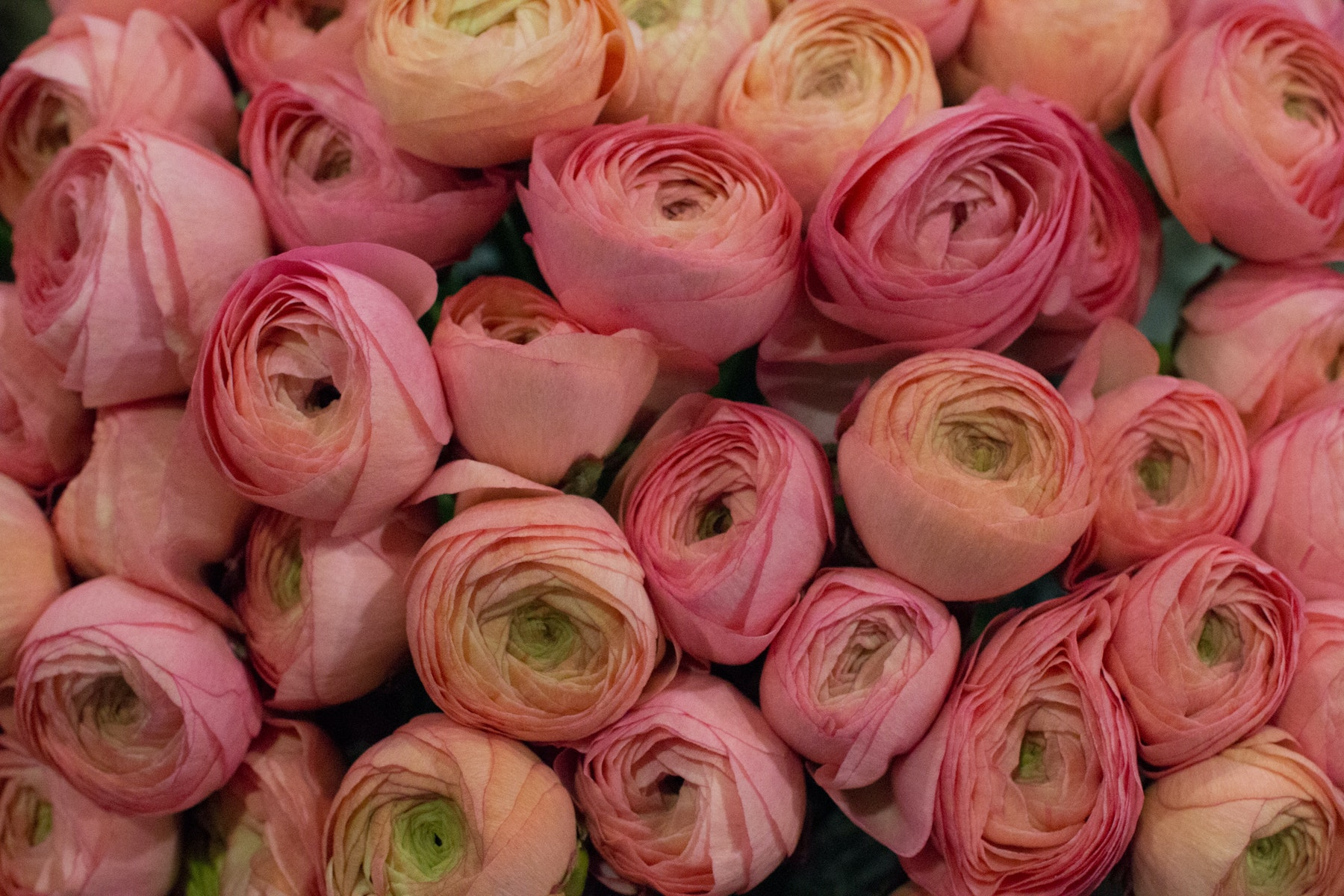New Covent Garden Flower Market March 2016 Market Report Flowerona Hr 9