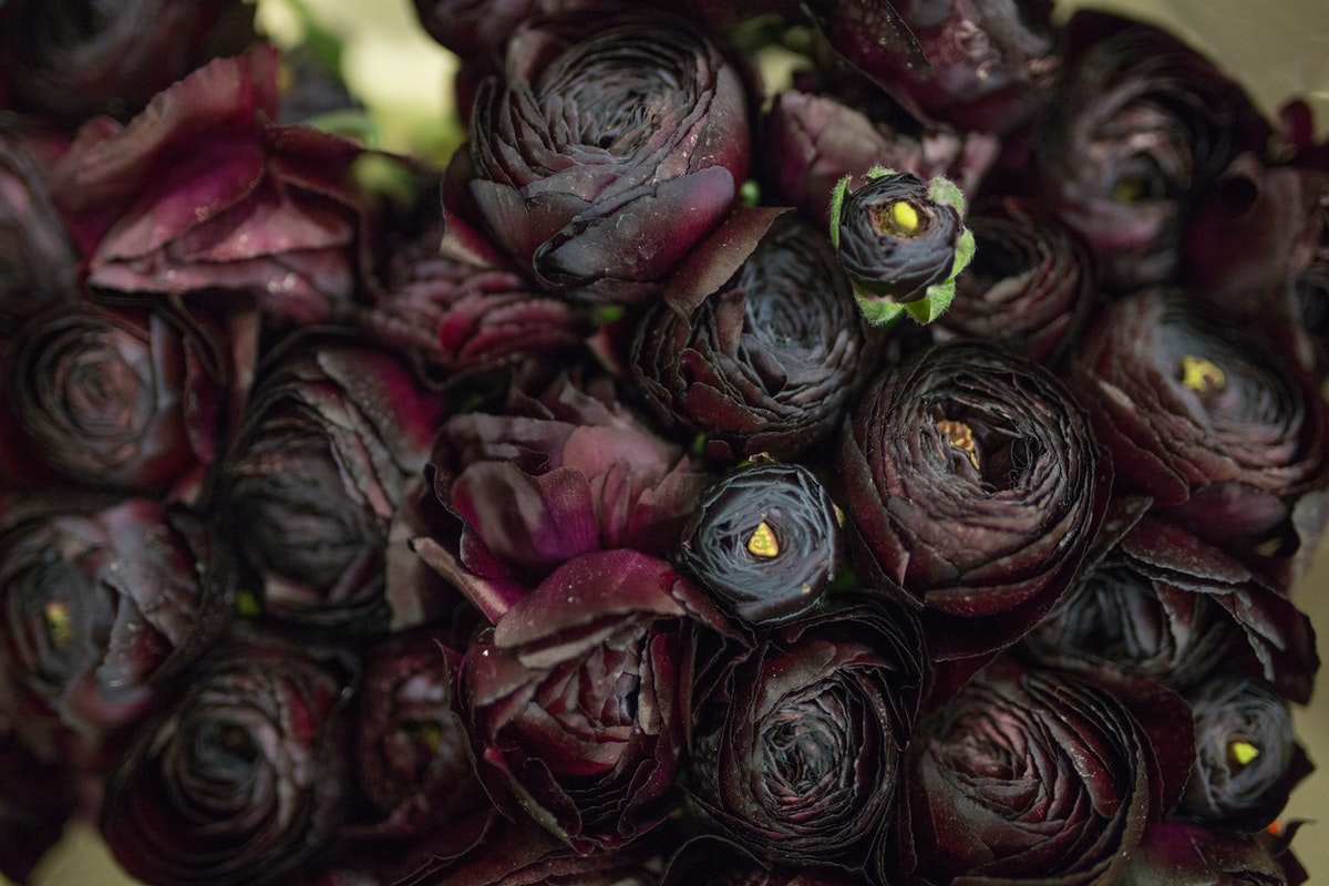 New Covent Garden Flower Market March 2017 Market Report Rona Wheeldon Flowerona Black Cloni Ranunculus At Bloomfield