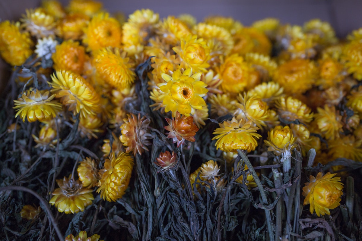New Covent Garden Flower Market March 2017 Market Report Rona Wheeldon Flowerona Helichrysum Also Known As Everlasting Flowers At Porters Foliage