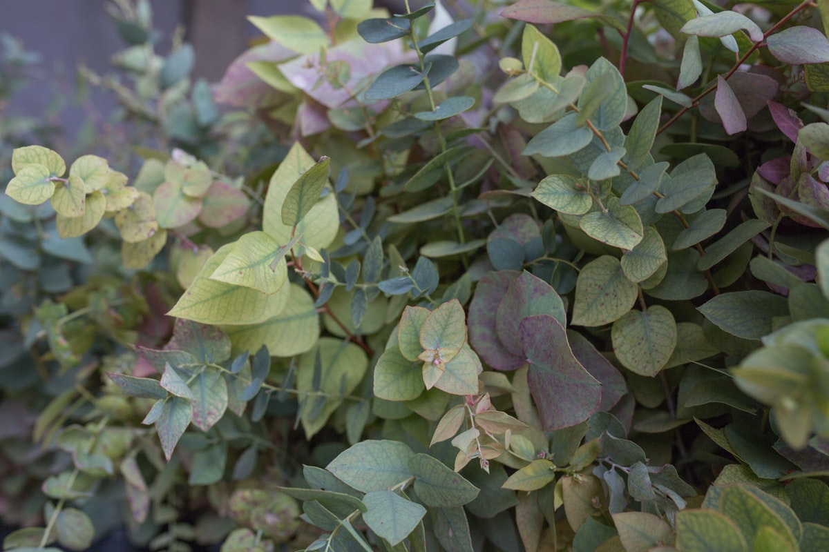 New Covent Garden Flower Market March 2017 Market Report Rona Wheeldon Flowerona Autumn Eucalyptus At Gb Foliage