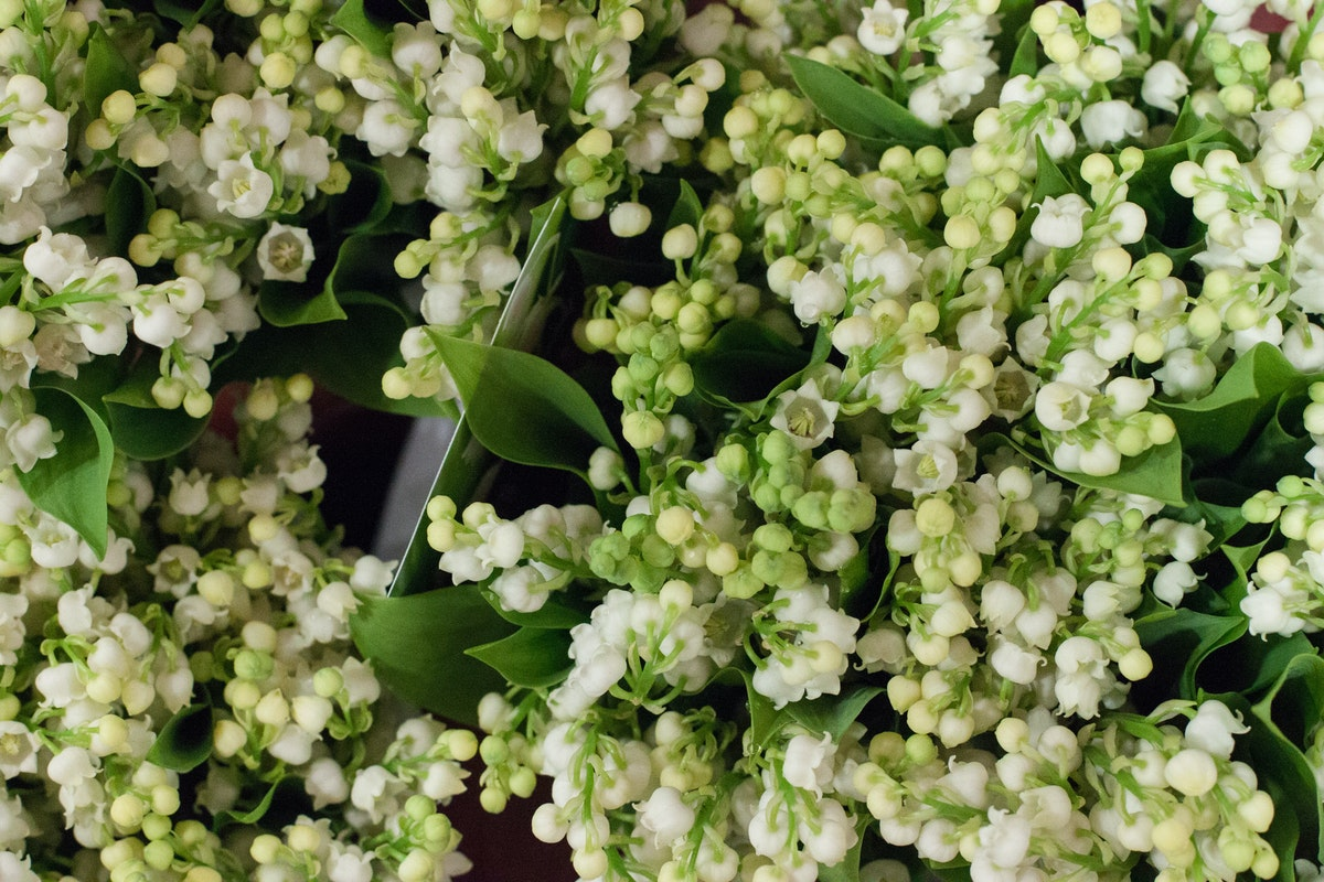 New Covent Garden Flower Market May 2015 Market Report Flowerona Hr 11