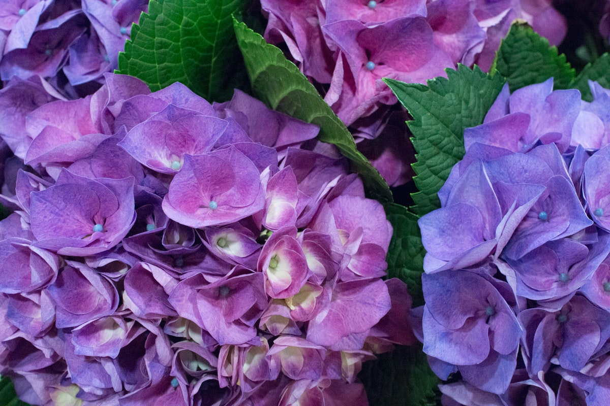 New Covent Garden Flower Market May 2016 Market Report Flowerona Hr 14