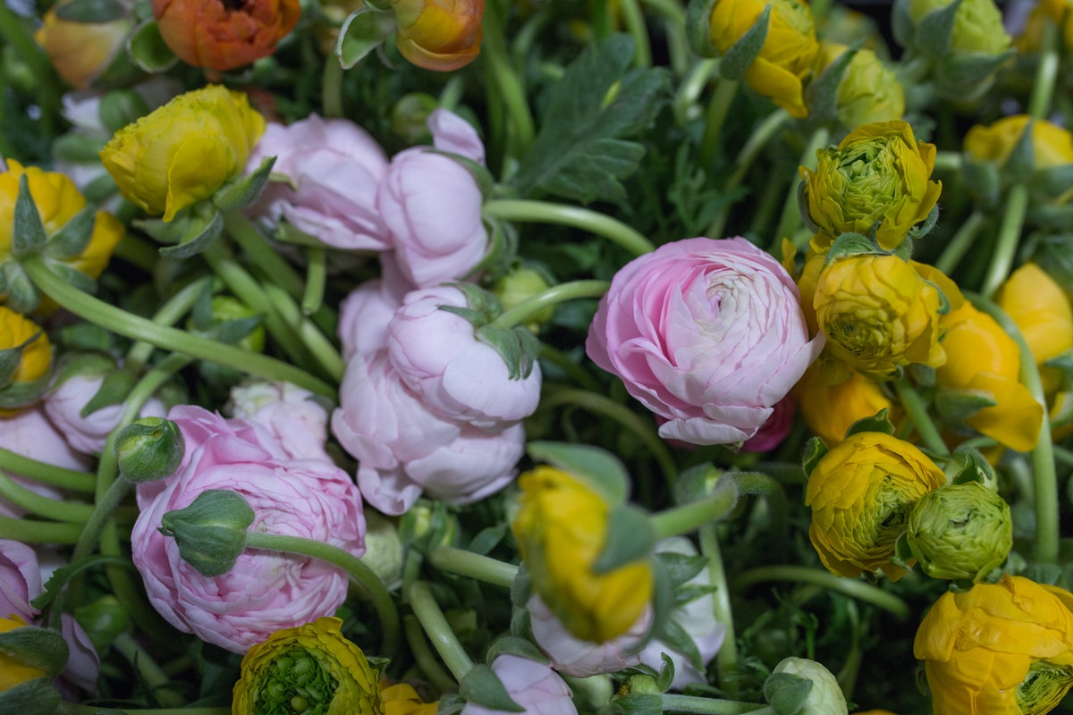 New Covent Garden Flower Market May 2017 Flower Market Report Rona Wheeldon Flowerona British Ranunculus At Pratley