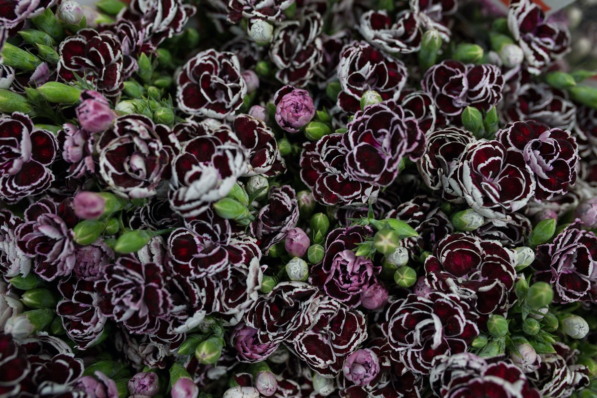 New Covent Garden Flower Market May 2017 Flower Market Report Rona Wheeldon Flowerona Dianthus Ôçÿ Blackjackôçö At A Goodchild
