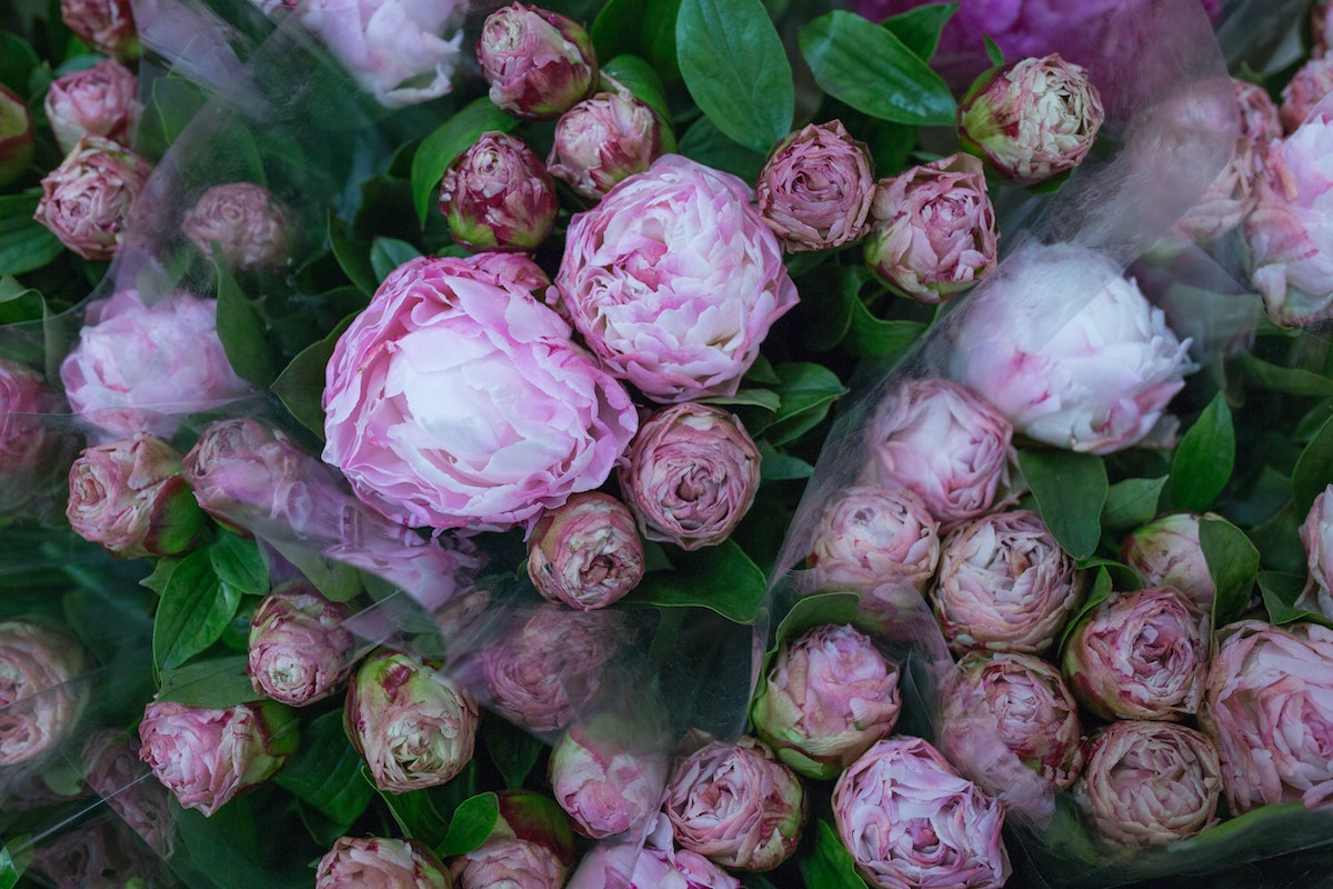 New Covent Garden Flower Market May 2017 Flower Market Report Rona Wheeldon Flowerona Gardenia Peonies At Dg Wholesale Flowers