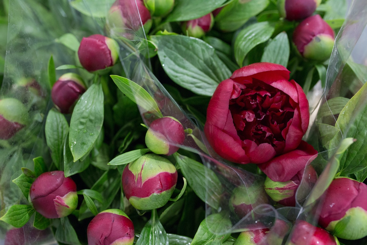 New Covent Garden Flower Market May 2017 Flower Market Report Rona Wheeldon Flowerona Red Charm Peonies At Deanos Flowers