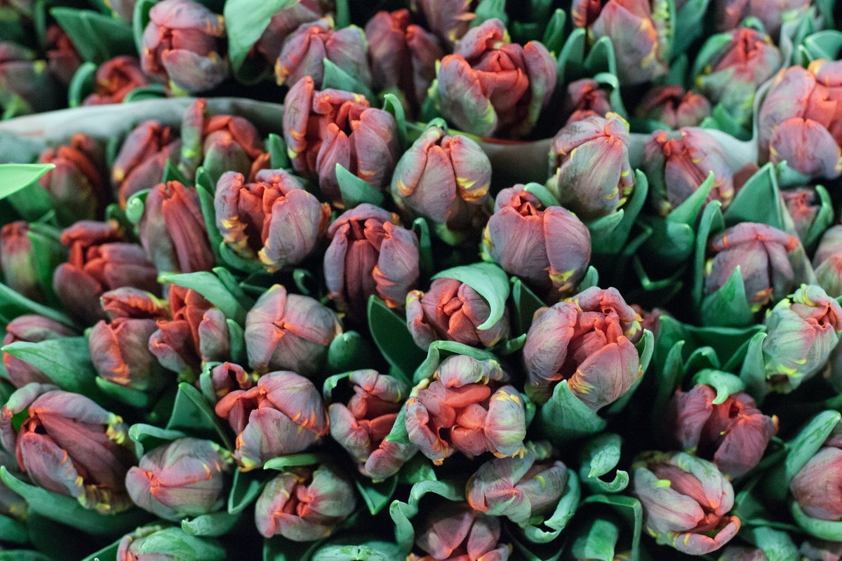 New Covent Garden Flower Market November 2015 Market Report Flowerona Hr 17