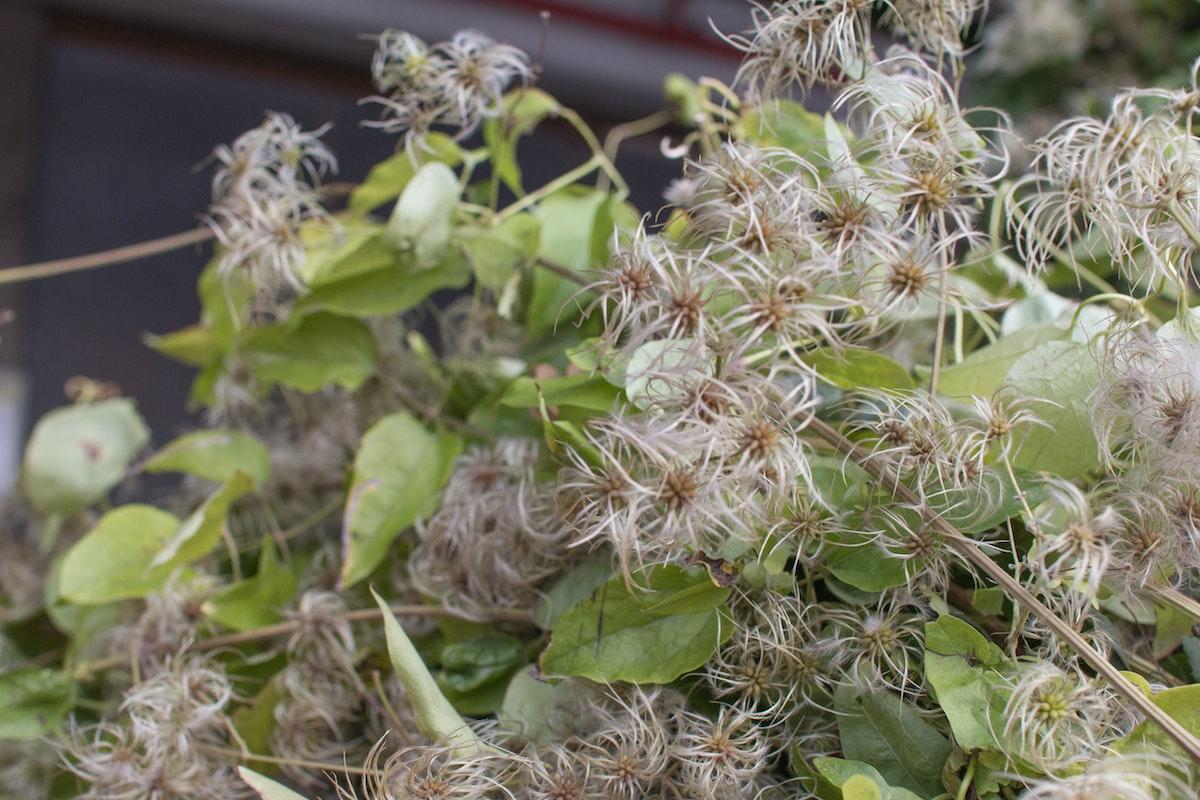 New Covent Garden Flower Market October 2016 Market Report Flowerona Hr A 28